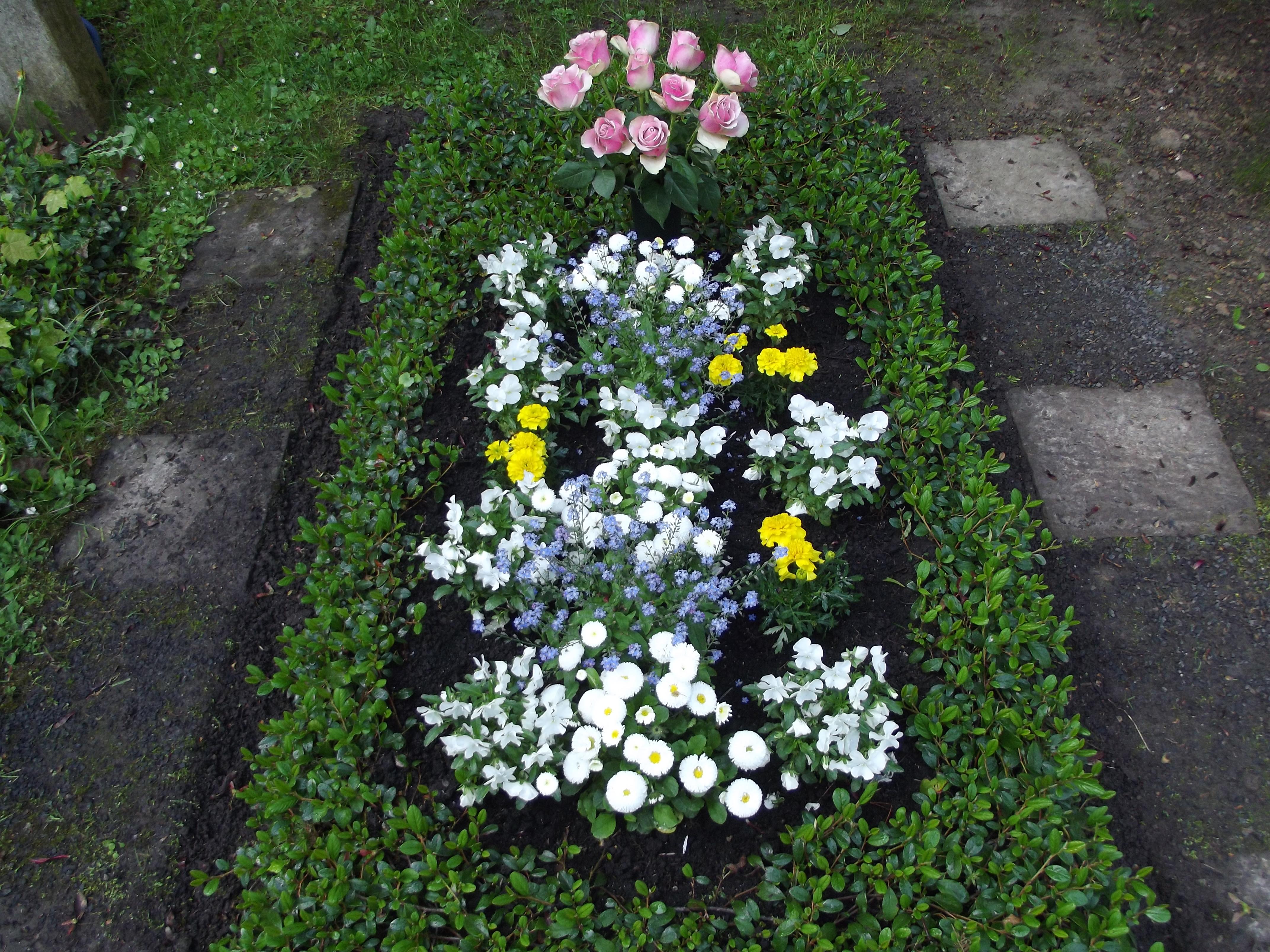 Musterbepflanzungen Blumen Fruhjahr 025 Friedhofsgartnerei Kassel